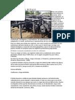 HISTORIA DEL BUFALO.docx