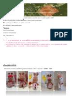 Catálogo Tonita Rosozó2018