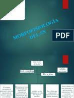 Morfofisiología Del Sn
