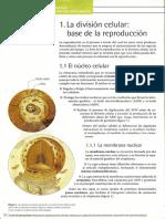 reproduccion-celular-y-tipos-de-reproducicion.pdf