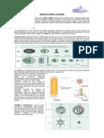 Guía de Estudio Virus