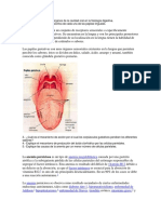 223308131-Describa-La-Funcion-de-Los-Organos-de-La-Cavidad-Oral-en-La-Fisiologia-Digestiva.docx