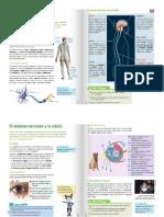 sistema nervioso central y perifericio
