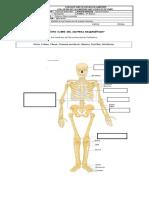 Guía Sistema Oseo Imprimir