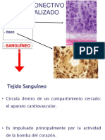 Tejido Sanguíneo .pdf