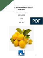 El Limón, Sus Enfermedades, Plagas y Beneficios