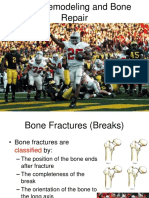 Bone Remodeling and Bone Repair (1)