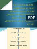 Función Del Sistema Renina-Angiotensina Fisio Lista