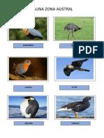Fauna Austral