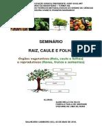 Seminário - Raiz Caule e Folha (Prof)