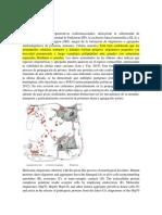 Las Patologías Neurodegenerativas Conformacionales