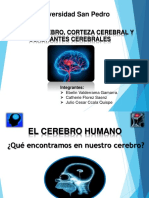 Cerebro Cuadrantes Cerebrales