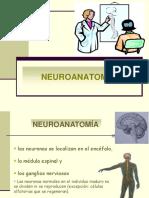 esquema_neuroanatomia.pdf