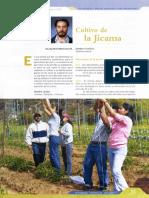 Cultivo de la Jicama.pdf