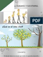 1.- Ciclo Vital Humano y Sus Etapas 2018