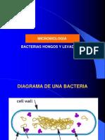 Fotos de Bacterias Hongos y Levaduras