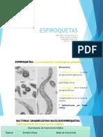 bacteriologia  espiroquetas ppt