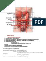 274889340-Anatomie-sesiune.doc
