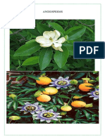 Plant Kingdom--15.4angiosperms Picture Parichay p 5
