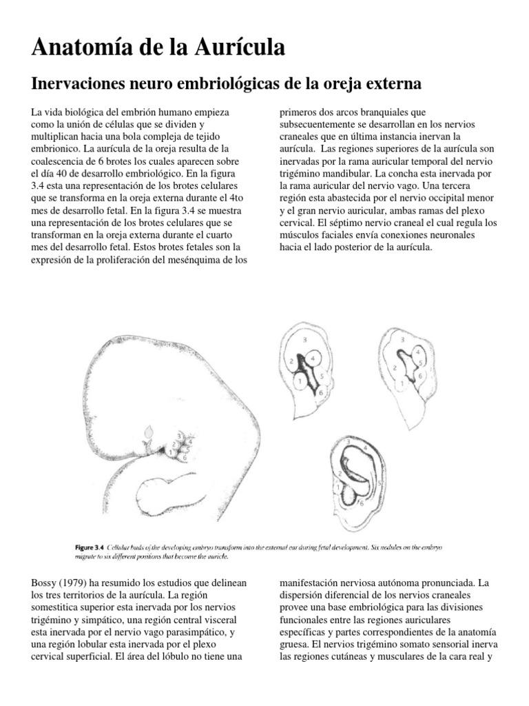 Anatomía de la Aurícula
