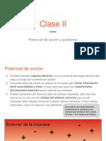 Tutoría Neurobiología Clase II