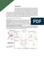 FARMACOLOGÍA Y ACCIÓN DE LOS DIURÉTICOS (2)