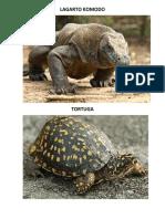 Album Reptiles Anfibios Peces