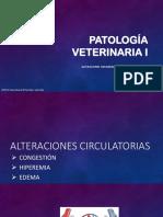Clase 5 Pato 1 Alt Hemo