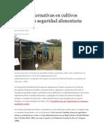 Nuevas Alternativas en Cultivos Mejoran La Seguridad Alimentaria