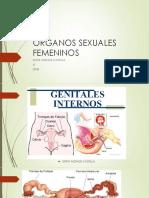 ÓRGANOS SEXUALES FEMENINOS