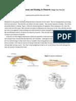 copy of gage-planaria lab