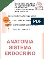 Anatomia del sistema endocrino.pdf