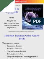 Gram + bacilli-2