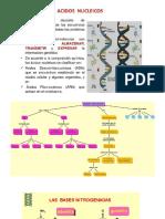 Acidos Nucleicos y Carbohidratos Si.docx