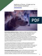 Estudiarveterinaria.com-Enfermedades Hepáticas en Perros Cuales Son Los Síntomas de Las Enfermedades Hepáticas