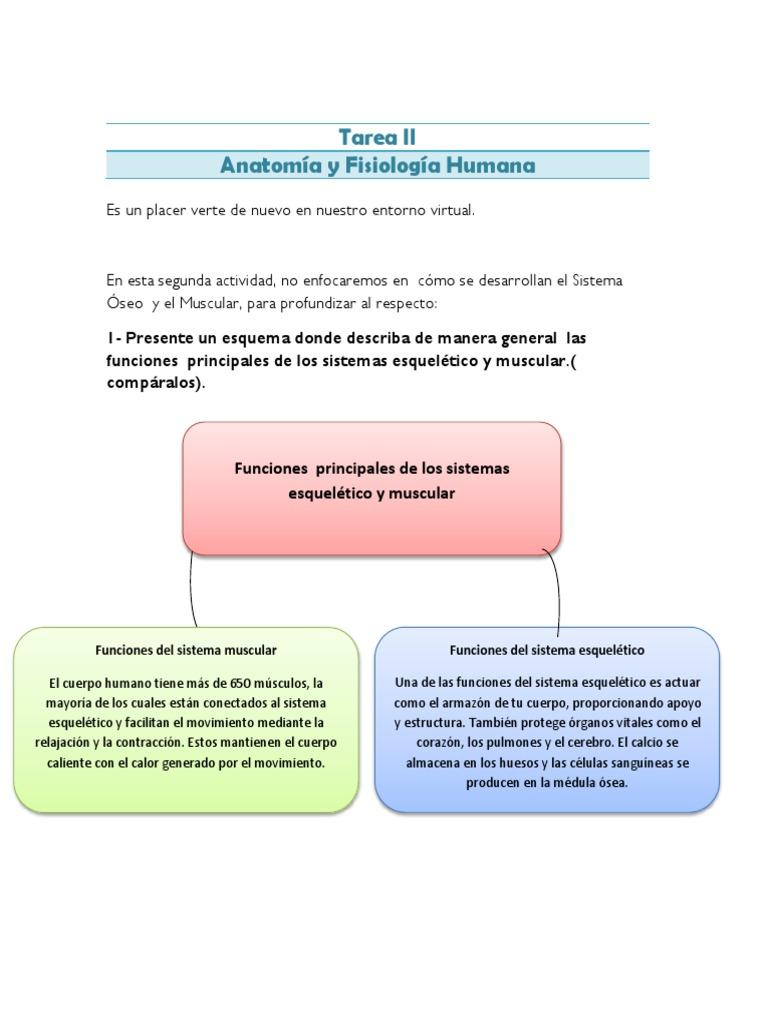 Perfecto Prueba De La Anatomía Muscular Bandera - Anatomía de Las ...
