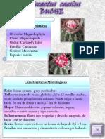 Revista Ilustrada Plantas Medicinales. Parte II