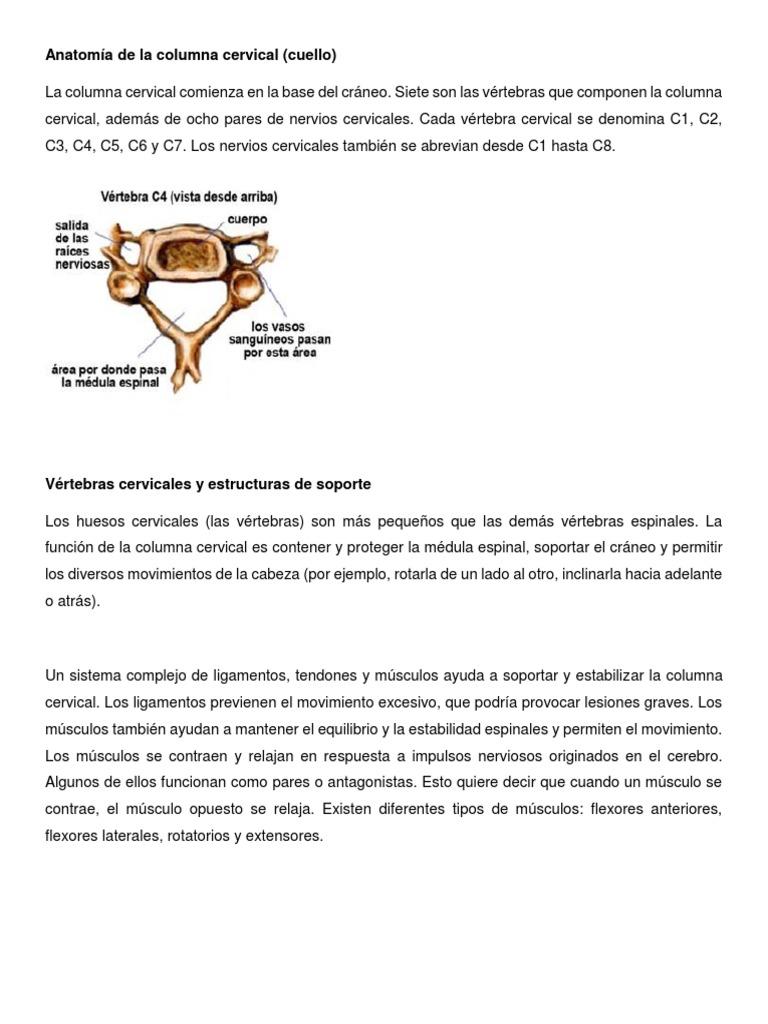 Encantador C1 Anatomía Del Cuerpo Vertebral Embellecimiento ...