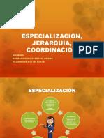 ESPECIALIZACIÓN, JERARQUÍA, COORDINACIÓN