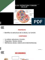 Semana 06_estructura y Funcion Celular