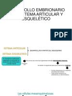 Desarrollo Embrionario Del Sistema Articular y Esquelético