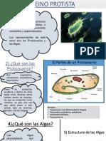 Reino Protista - Fungi 1ero