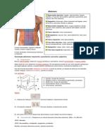 semiología básica del abdomen