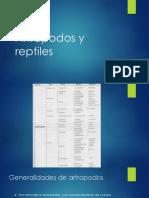 Artrópodos y Reptiles