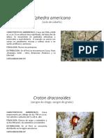Especies Amenzadas de Flora Silvestre