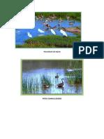 Aves Pantanos de Villa