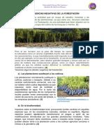 La Forestación