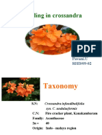 Breeding in Crossandra