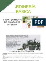 4. Mantenimiento Plantas Interior