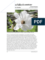 Magnolias for coolder climates